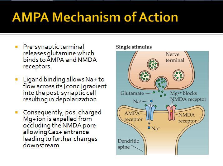 nmda vs ampa